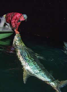Huge tarpon caught at night in the Florida Keys