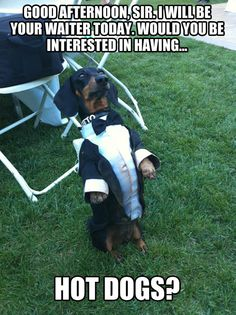 """He Looks Like Jay Pritchett's Dog Butler on """"Modern Family!"""" dachshund print, love my dog quotes, puppy mom quotes Funny Dog Photos, Funny Pictures With Captions, Funny Animal Pictures, Cute Funny Animals, Funny Cute, Hilarious, Animal Pics, Funny Dachshund, Dachshund Love"""