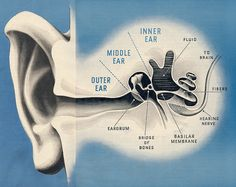 Home remedies for inner ear infection is one of the best way for the treatment because such treatments are all made from natural plant. Ear Infection Home Remedies, Home Remedies For Earache, Remedies For Tooth Ache, Natural Home Remedies, Braggs Apple Cider Vinegar, Braggs Acv, Fluid In Ears, Coconut Oil For Dogs, Ear Drops