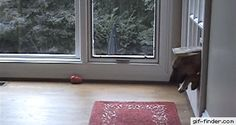 Dog makes it through cat flap | Gif Finder – Find and Share funny animated gifs