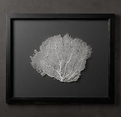 To buy: Whaite and black reserved Sea Fan with Grey Mat-get both