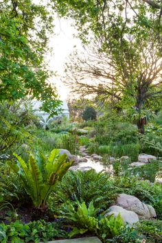 Designer: Carrie Latimer Style: Water Garden Type: Private Garden Area: Cape Town Carrie, Water, Plants, Gripe Water, Plant, Planets