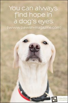 """You can always find hope in a dog's eyes."""