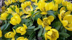 FarbeRaumZeit: Spring....