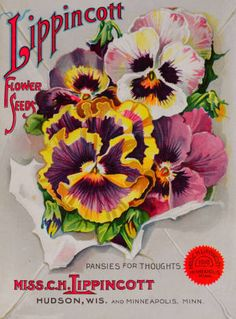 Flower seeds / Miss C.H. Lippincott. :: Nursery and Seed Catalogs