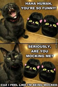 Mocked by the black cat slippers