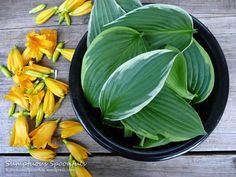 Hostas and Day Lilies are Edible!