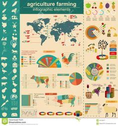 agriculture-animal-husbandry-infographics-vector-illustrationstry-info-graphics-illustration-44732611.jpg (1300×1390)