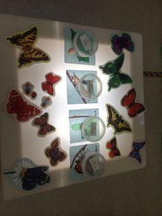 Resultado de imagen para butterfly light table school