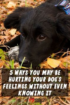 Our dogs have sensitive souls!