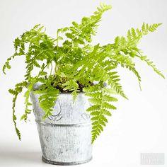 125 Best House Plants Succulents Indoor Gardens Images On