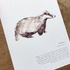 A Natural Year - Badger - A5 Print — anniebrougham.com English Gifts, History Books, Badger, Natural History, A5, Fine Art Paper, Digital Prints, Fine Art Prints, Texture