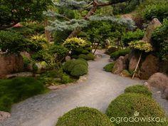 W moim małym ogródeczku - Dorota - strona 51 - Forum ogrodnicze - Ogrodowisko