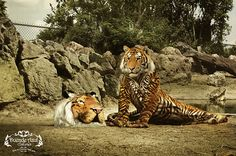 animal costumes used in adverts - Google Search