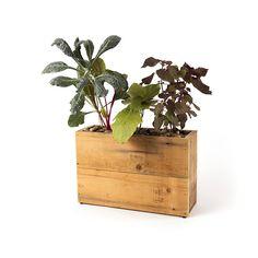 ModernSprout Hydroponic Kitchen Herb Planter