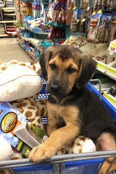 When writing assistant look this cute! #puppy #adoption #petsmart