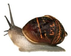 Snails and Slugs Pack their Bags and Leave with Homeopathy