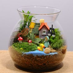 Pin by Plants Bank on Terrariums in 2020