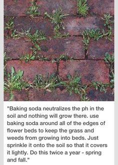 Garden Yard Ideas, Lawn And Garden, Garden Projects, Garden Edging, How To Kill Grass, Weed Killer Homemade, Lawn Care, Dream Garden, Flower Beds