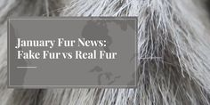 January Fur News: Fake Fur vs Real Fur