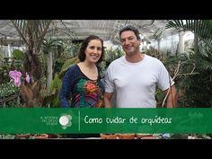 Como Cuidar de Orquídea Phalaenopsis/Care of Phalaenopsis orchid - A Menina do Dedo Verde - YouTube