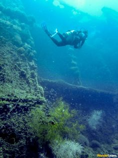 Diving The Wreck Of The SS Yongala http://wlst.us/TS #Live4Adventure #scuba #travel