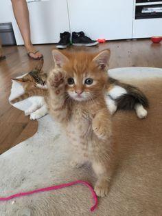 Someone Wants To Say Hi!