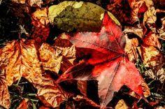 En septiembre, prepara tu jardín para la llegada del otoño. Painting, Art, Plant Decor, September, Plants, Flowers, Painting Art, Paintings, Kunst