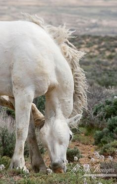 Scratch  Fine Art Wild Horse Photograph by Carol Walker www.LivingImagesCJW.com