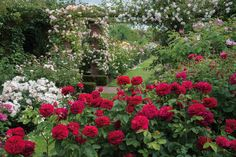 While most roses perform best in full sun (more than 6 hours a day), a number of English roses also enjoy partial shade where they will reward you with their sumptuous blooms. However, they will need to receive at least 4 to 5 hours of sunshine daily.