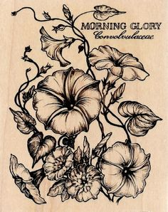 New RARE Pretty PSX Botanical MORNING GLORY FLOWER Background K2047 Rubber Stamp