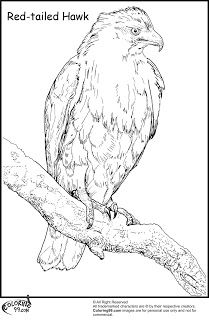 Birds of prey coloring book dover nature coloring book for Birds of prey coloring pages