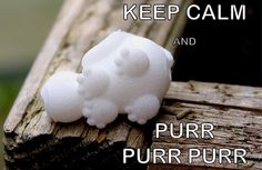 KEEP CALM AND PURR PURR PURR  #meme