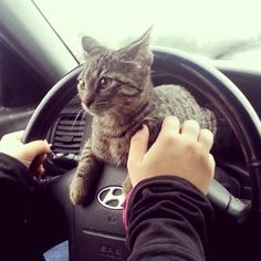 If I was a cat, this would be me when you were trying to drive off to work.