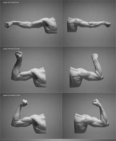 ArtStation - Digital Sculpting Human Anatomy Studies, Adrian Spitsa