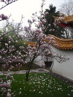 switzerland. zurich. chinese garden.
