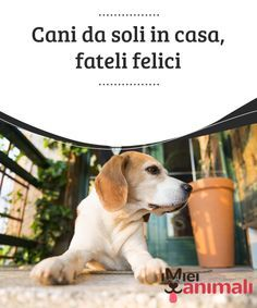 Cani da soli in casa, fateli felici Ci sono tanti cani che soffrono d'ansia per #eparazione quando rimangono da soli in casa, questo provoca #stress e #comportamenti inadeguati. #Consigli