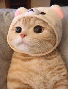 Baby Animals Super Cute, Cute Baby Cats, Cute Kittens, Cute Cats And Kittens, Cute Little Animals, Cute Funny Animals, Cats In Hats, Cute Baby Meme, Funny Cute Cats