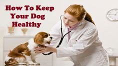 How to keep your dog healthy and happy by Learn how to