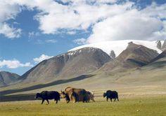 mongol altai