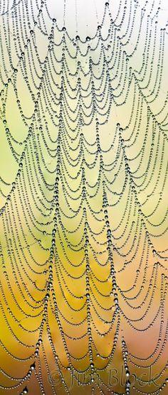 df625-spider-web-at-sucker-brook-crop by ?