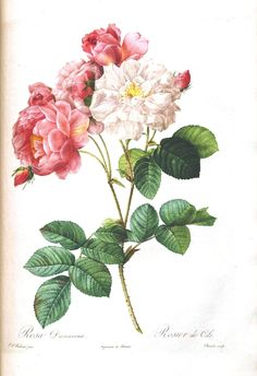 LOADS OF THEM!!! FREE!!! Vintage Printable – Botanical – 7 | Vintage Printable