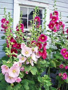 Perennials Fabric, Full Sun Perennials, Shade Perennials, Flowers Perennials, Planting Flowers, Flower Gardening, Vegetable Gardening, Container Gardening, Simple Garden Designs