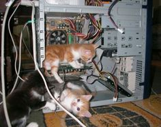 Well there's your problem. A bad case of kittens!