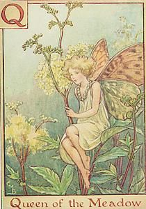 The Queen of the Meadow Fairy. Vintage flower fairy art by Cicely Mary Barker. Taken from ' A Flower Fairies Alphabet'. Click through to the link to see the accompanying poem. Cicely Mary Barker, Elfen Fantasy, Fantasy Art, Flower Fairies, Fairy Pictures, Vintage Fairies, Meadow Flowers, Fantasy Illustration, Fairy Art