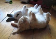 I wish bunnies didnt smell bad...they are so damn cute!