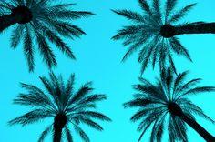 Palm Trees Las Vegas DSC_2122 by Dallas Photographer David Kozlowski, via Flickr