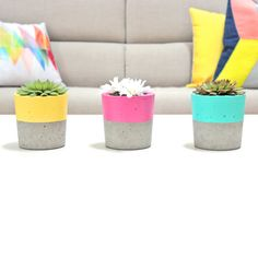 Loving these concrete and colorful planters.