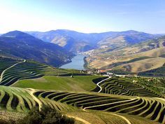 The Douro Valley is one of Portugal's best wine-growing regions. Image courtesy of Jsome 1 on Flickr.