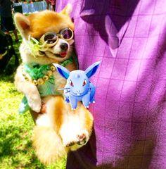Look who just caught a Pokémon! #bestofhonolulu #hawaii #Honolulu #pokemongo